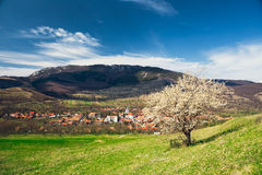 Village under the mountains in Transylvania with lonely spring tree. Stock Photo