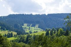 Village in the valley by the forest Stock Image