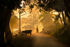 A village view in early morning. A typical village view with cows, fog , trees, light poles and peoples Stock Photos
