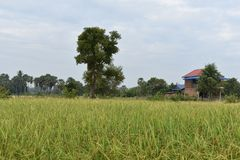Village view from the field. The photo taken a house in the village from the field royalty free stock image