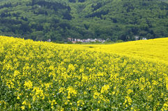 Village view with flowering rapeseed field and forest. Germany, near the village Dannenfelds, federal state Rhineland-Palatinate, agriculture, farming, plays an Royalty Free Stock Photography