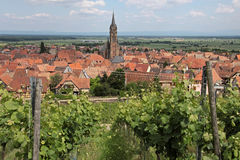 Village with vineyards Stock Images