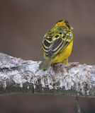Village weaver Royalty Free Stock Photos