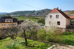 Village of Weissenkirchen-in-der-Wachau with flowering fruit trees in foreground. Wachau-valley, Lower Austria. Stock Photo