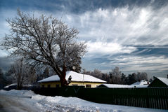Village in winter. A tree with snow in village royalty free stock images