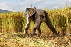 Village woman harvests fully grown grain in Yunnan stock photos
