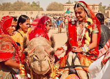 Village women in red sari riding the camels Stock Photo