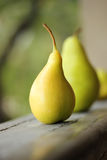Village yellow pear Stock Photography