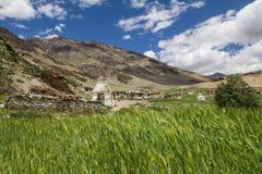 A village in Zanskar. The village of Cha in Zanskar, Jammu and Kashmir royalty free stock photography