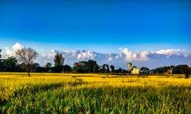 VillagePalampur stockfoto