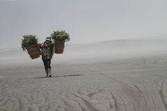 Villager bring grass. For his animal trough caldera and sandstorm at desert Stock Image