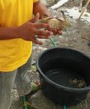 Villager catch crab Stock Photos