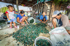 The villager are cleaning an Asian green mussel. CHACHOENGSAO,THAILAND-FEBUARY 6: The villager are cleaning an Asian green mussel and prepare for sale in Stock Images