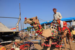 Villager with his camel participate in Pushkar Fair Royalty Free Stock Images