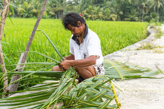 Villager sitting near the rice fields and weaving a basket out of palm leaves. Royalty Free Stock Images
