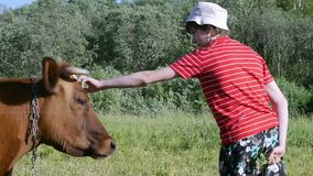 Teenager in pasture stroking cow close up stock video