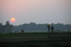 Villagers return home after a hard day on the rice fields Stock Image