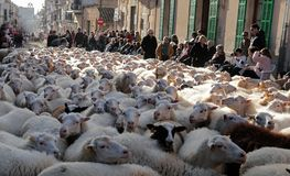 Villagers watching sheep cattle crossing the village of Muro in Mallorca royalty free stock photos