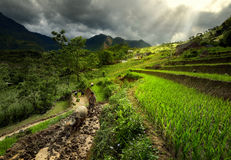 Villagers working on rice terraces Stock Images