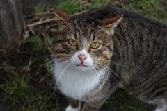 A beautiful domestic house cat stock images
