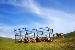 Villages and cattle Royalty Free Stock Image