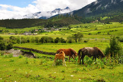 Villages and horses Stock Photo