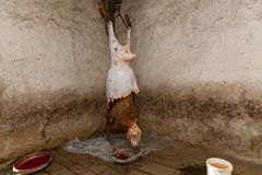 In villages killed a sheep. In a village killed a ram on a holiday the farmer removes the skin from the ram. Fresh carcass of sheep Stock Images