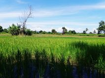 The villages of Rice Royalty Free Stock Images