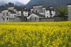 Villages surrounded by flower Stock Photo
