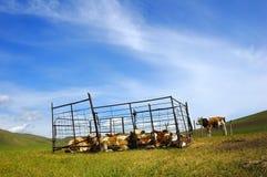 Villaggi e bestiame Immagine Stock Libera da Diritti