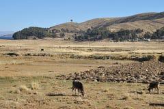 Villaggio boliviano sulle rive del Titicaca Fotografie Stock Libere da Diritti