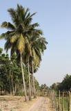Villaggio Bosonti, India del bengalese Fotografie Stock Libere da Diritti