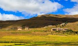 Villaggio con le risaie nel Madagascar centrale Fotografia Stock