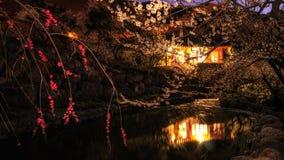 Villaggio del fiore della prugna Fotografie Stock