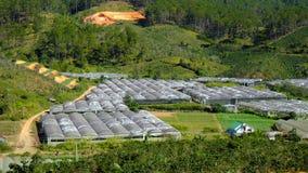 Villaggio del fiore di Dalat, Vietnam, agricoltura alta tecnologia Fotografia Stock