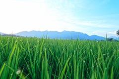 Villaggio del giacimento del riso Fotografia Stock