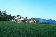 Villaggio del giacimento del riso Fotografie Stock Libere da Diritti