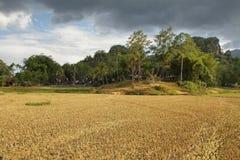 Villaggio del kesu di Kete Immagine Stock
