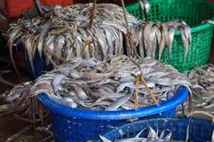Villaggio del pesce di Sekinchan Immagine Stock