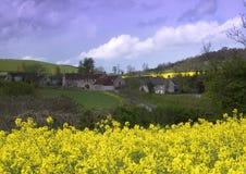 Villaggio del seme di ravizzone Fotografie Stock Libere da Diritti