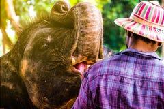 Villaggio dell'elefante fotografie stock libere da diritti