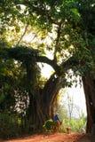 Villaggio della cima dell'albero di banyan Fotografie Stock