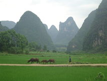 Villaggio della Cina Fotografia Stock