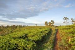 Villaggio di Cau Dat, città del Lat del Da, provincia di Lam Dong, Vietnam Fotografie Stock