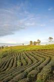 Villaggio di Cau Dat, città del Lat del Da, provincia di Lam Dong, Vietnam Fotografia Stock Libera da Diritti