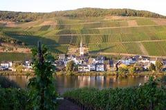 Villaggio di crescita di vino Fotografia Stock Libera da Diritti