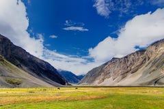 Villaggio di Drass, Kargil, Ladakh, il Jammu e Kashmir, India Fotografie Stock Libere da Diritti