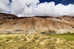 Villaggio di Drass, Kargil, Ladakh, il Jammu e Kashmir, India Fotografia Stock