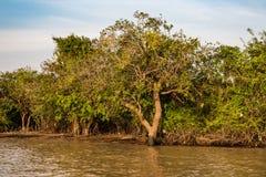 Villaggio di galleggiamento, Cambogia, linfa di Tonle, isola di Koh Rong fotografia stock libera da diritti