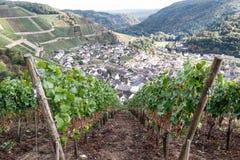 Villaggio di Mayschoss in valle di Ahr, Germania Immagini Stock Libere da Diritti